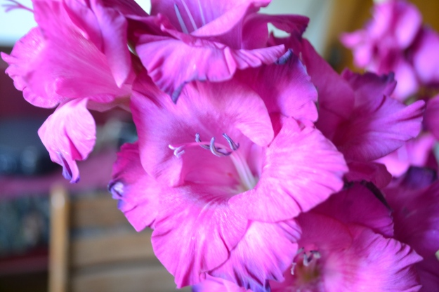 I'm enjoying bouquets of gladiolus.